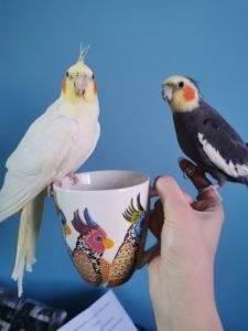 papugi na siedziace na kubku
