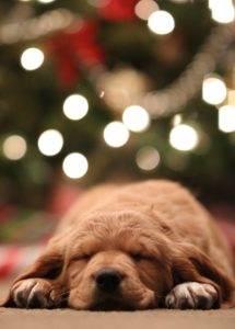 leżący pies zchoinką wtle