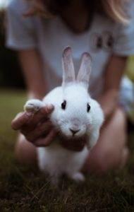 biały królik trzymany za łapki, na łące
